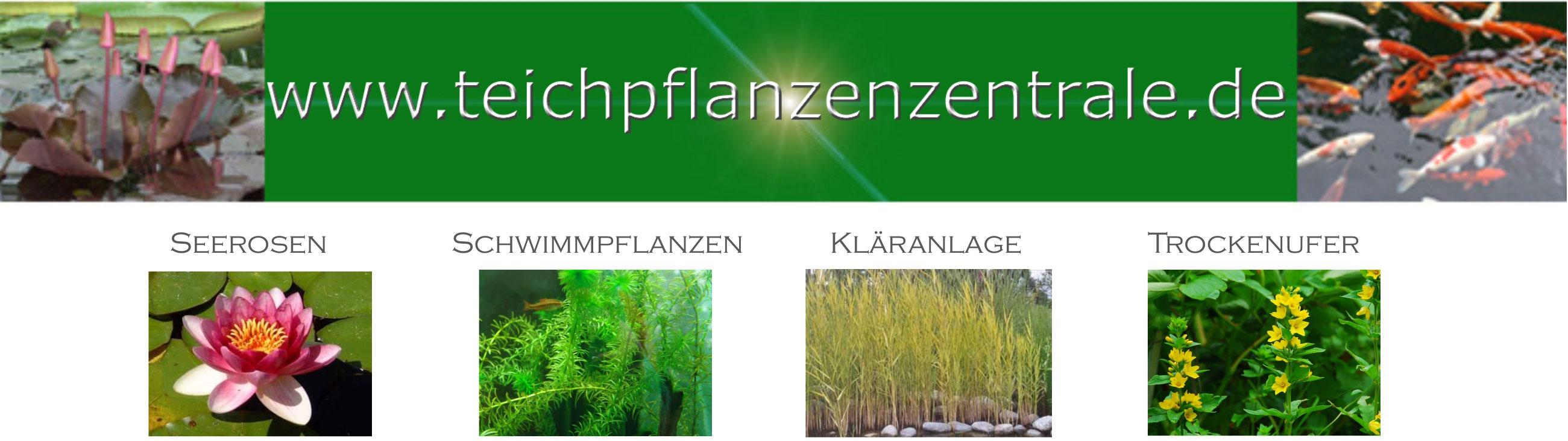 spezialgeschäft für teichpflanzen bayern